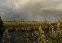 rainbow-over-big-cypress-everglades