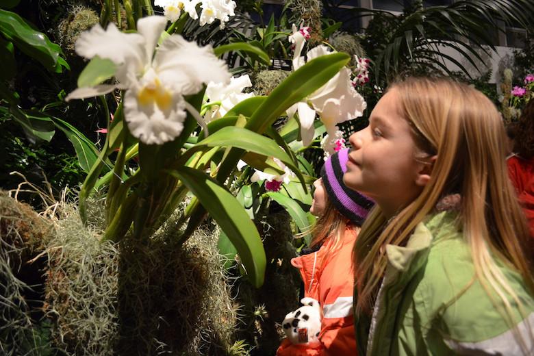 Missouri-Botanical-Garden-Orchid-Show