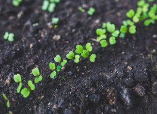 garden-gardening-planting