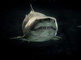 animals-aquatic-black-and-white-726478