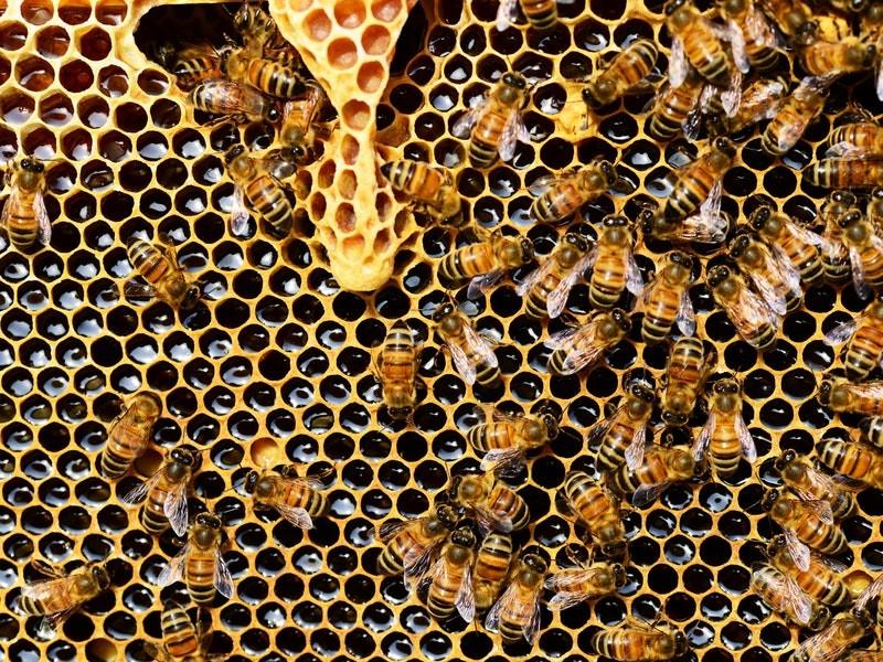honey-festival