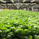 bio-farm
