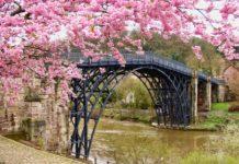 cherry-blossom-festivals