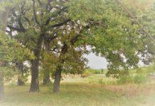 texas-small-land